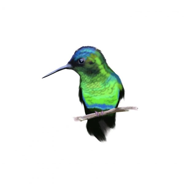Little hummingbird by Leysa Flores / www.leysafloresdesign.com.au